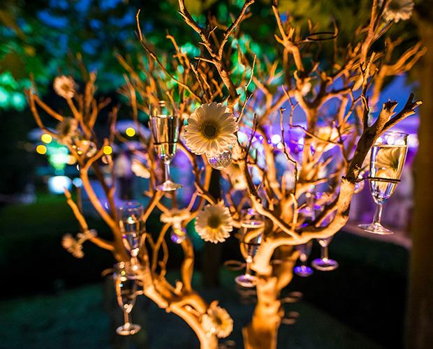 champagneboom 's-nachts verlicht