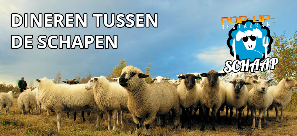 pop up restaurant schaap dineren tussen de schapen